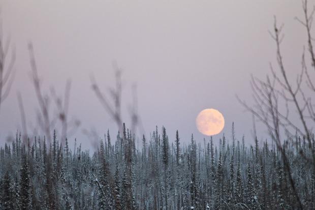 The Winter Moon