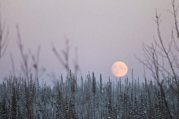 The Winter Moon