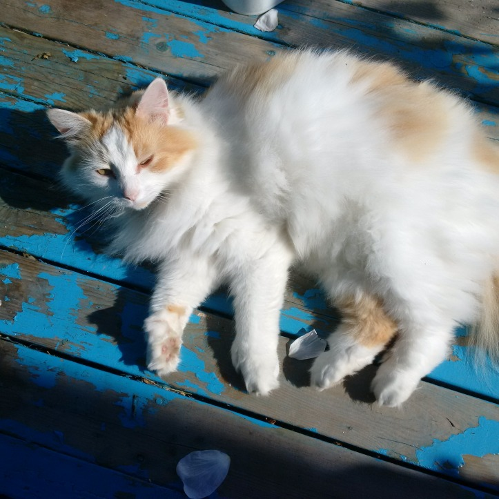 Wiccan's Cat Familiar in the Sun